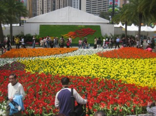tulips at hong kong flower show